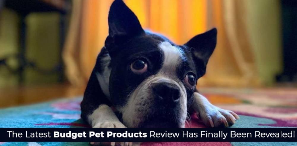The Latest Budget Pet Products Review Has Finally Been Revealed!